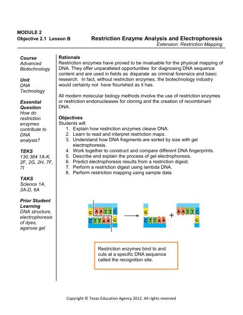 Gel Electrophoresis Virtual Lab Worksheet Answer Key ...