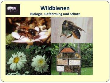 Klasse 5-7 - Wildbienen in der Umweltbildung
