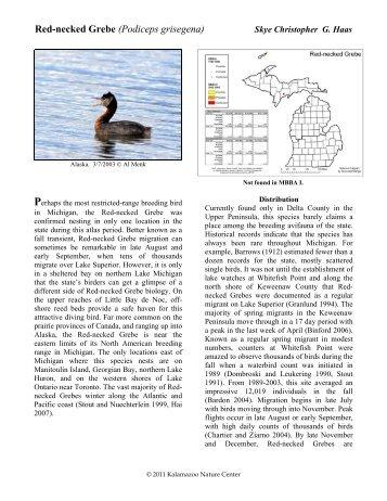 Red-necked Grebe - Michigan Breeding Bird Atlas Website