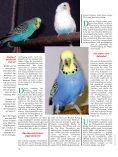 Leseprobe: Der Artikel als PDF (1,58 MB) - Birds Online - Seite 5