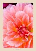 Dagelijkse aromatherapie gids - Page 4