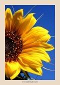 Dagelijkse aromatherapie gids - Page 6