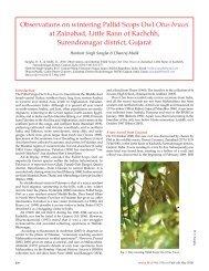 Observations on wintering Pallid Scops Owl Otus ... - Indian Birds