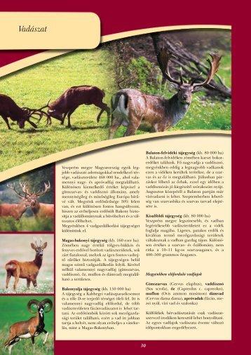 Vadászat - Veszprém megye honlapja