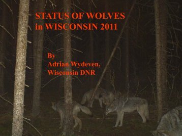 Wolves in Wisconsin