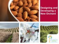 Designing and Developing a New Orchard - Almond Board of ...