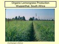 Organic Lemongrass Production - University of California Small ...