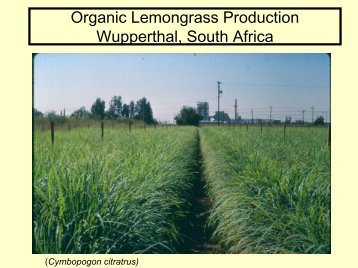 Organic Lemongrass Production - University of California Small ...