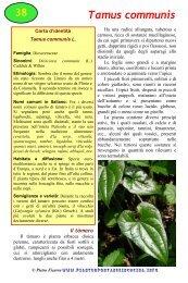 Tamus communis - Piante spontanee in cucina