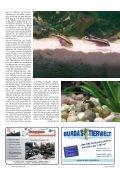 Aquarium, Entspannung pur - Seite 2