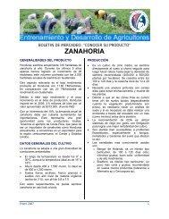 ZANAHORIA - Cuenta del Milenio - Honduras