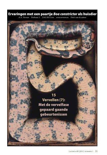 Keeping a pair of Boa constrictor as pets: 15. Ecdysis 7 ... - verveen.eu