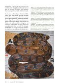 Keeping a pair of Boa constrictor as pets: 15. Ecdysis 7 ... - verveen.eu - Page 2