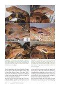 Keeping a pair of Boa constrictor as pets: 15. Ecdysis 7 ... - verveen.eu - Page 4