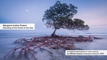 Mangrove Action Project Standing at the Roots of the Sea