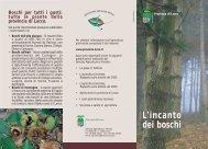 Bosco - Provincia di Lecco