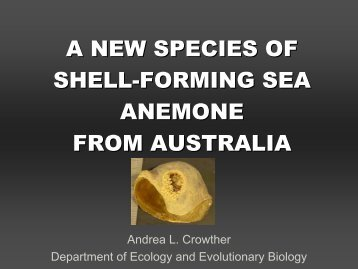 a new species of shell-forming sea anemone from australia