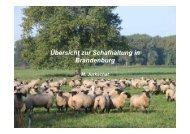 Übersicht zur Schafhaltung in Brandenburg 2012