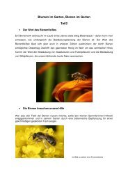 Blumen im Garten - Bienenzuchtverein Sulzbach-Rosenberg 1871