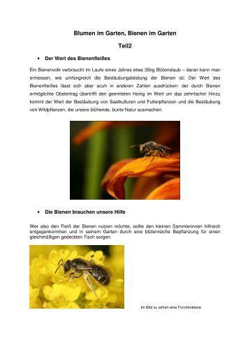 Tanzsprache Der Bienen Arbeitsblatt: Tanzsprache der bienen ...