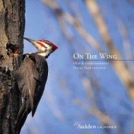 Annual Report, 2010 - 2011 - Audubon California - National ...