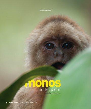 Monos del Ecuador - Abordo.com.ec