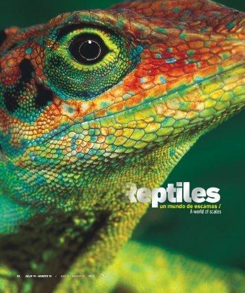 Reptiles un mundo de escamas - Abordo.com.ec
