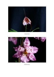 Judges Choice 2012 - Nambour Orchid Society