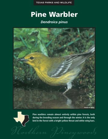 Pine Warbler - The State of Water