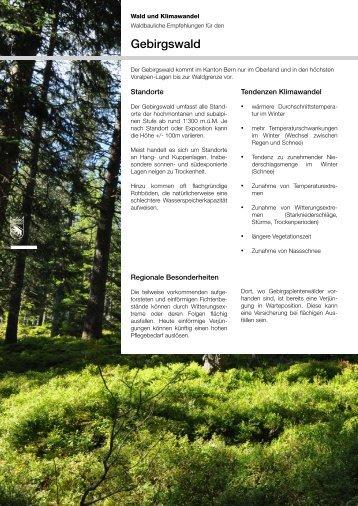 Waldbau & Klimawandel BE - Gebirgswald - Kanton Bern