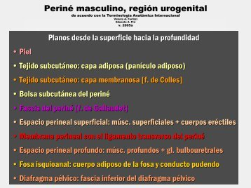 Espacio perineal profundo - FMV