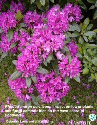 Rhododendron ponticum: impact on lower plants and ... - Plantlife