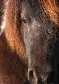 Djurskyddsbestämmelser Häst - Jordbruksverket - Page 4