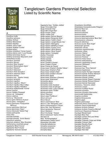 Tangletown Gardens Perennial Selection
