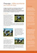 Guide du Rugby - International Rugby Board - Page 5