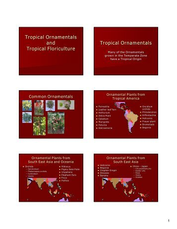 Tropical Ornamentals and Tropical Floriculture ... - Aggie Horticulture