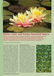 Wenn Licht und Farbe Hochzeit feiern - Birseck Magazin