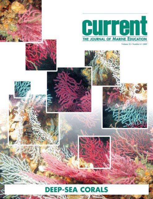 sea urchin decor.htm deep sea corals marine conservation biology institute  deep sea corals marine conservation