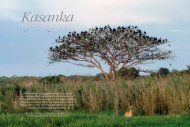 more than just bats - Kasanka Trust Zambia
