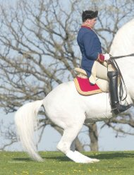 Lipizzans and the Airs Above the Ground - The Tempel Lipizzans