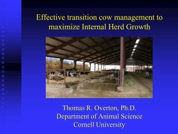 Effective transition cow management to maximize Internal Herd Growth