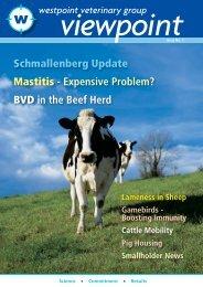 BVD in the Beef Herd - Westpoint Veterinary Group