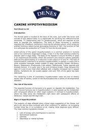 CANINE HYPOTHYROIDISM - Denes Natural Pet Care