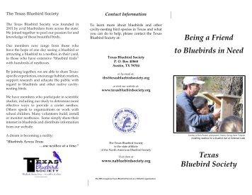 PDF (700KB) - Texas Bluebird Society