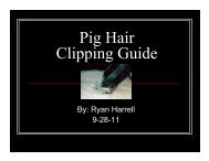 Pig Hair Clipping Guide - The Judging Connection .com