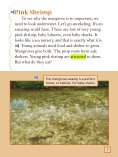 Lesson 8:Mangrove Swamp - Page 6