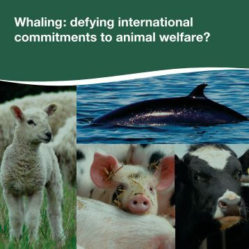 Whaling: defying international commitments to animal welfare?