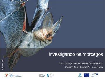 Investigando os morcegos - Ciência Viva