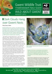 Wild About Gwent August 2012.pdf - Gwent Wildlife Trust