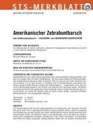 Amerikanischer Zebrabuntbarsch - Schweizer Tierschutz STS